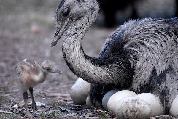 imagen de Los mensajes y la comunicación: lo que nos enseñan los animales